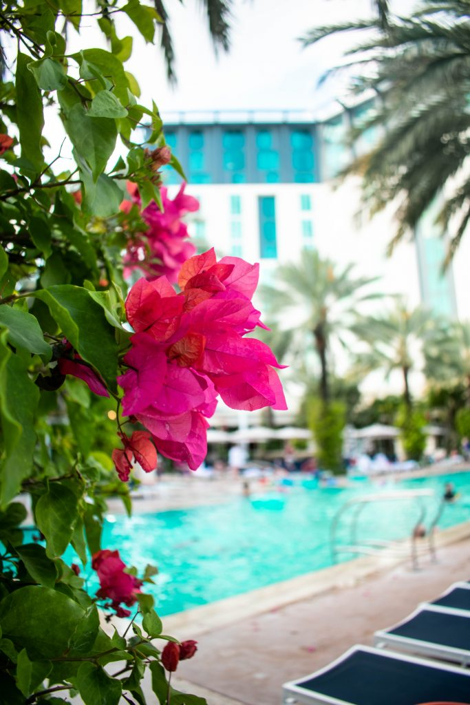 pink flowers poolside Hilton West Palm Beach Florida