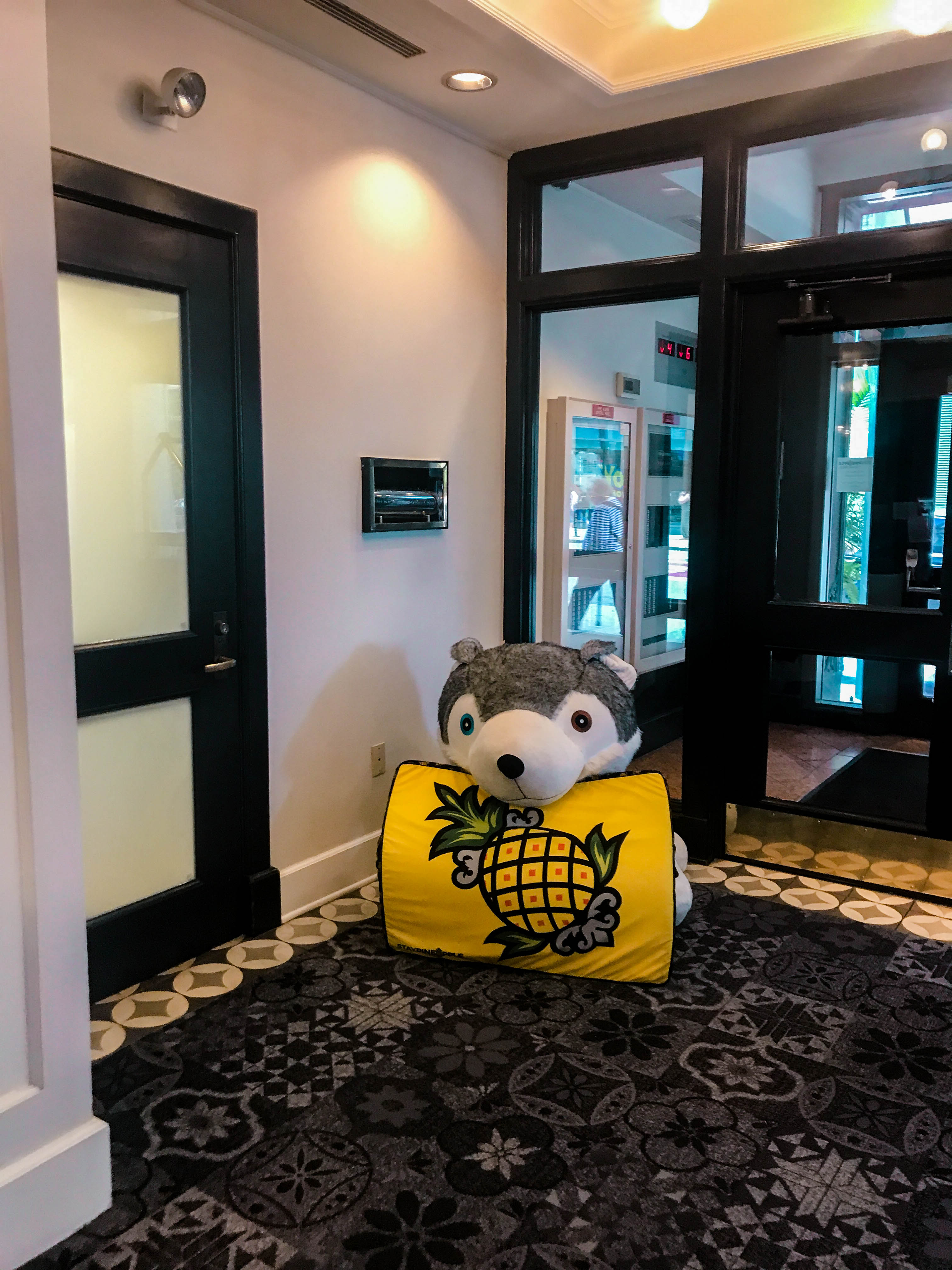 dog friendly hotel in chicago staypineapple the loop washington st