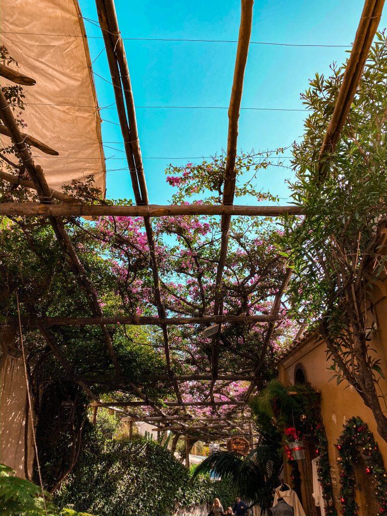 Positano bougainvillea trellis street amalfi italy