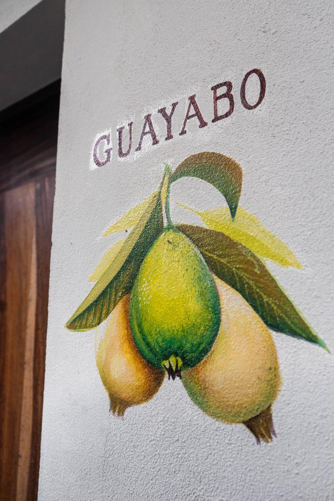guayabo room hotel casa ortiz ciudad valles la huasteca potosina san luis potosi mexico guava fruit mural