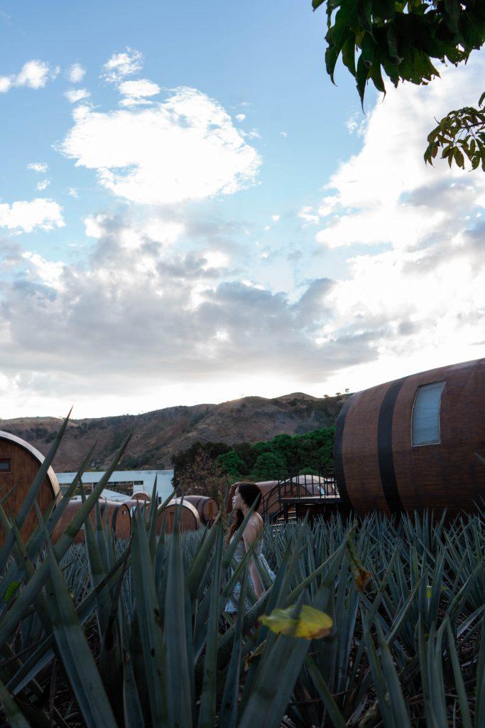 eva phan eva darling blue agave field tequila barrel hotel room matices hotel de barricas tequila jalisco mexico