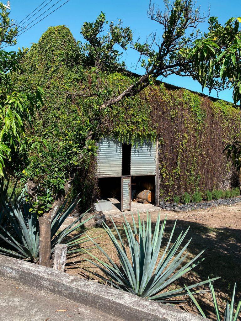 tequila aging cellar barrels tequilera hacienda la cofradia tequila distillery jalisco mexico