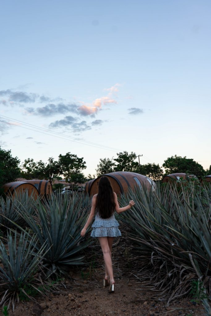 blue agave field tequila hotel mexico matices hotel de barricas barrel hotel tequila sunrise jalisco mexico lulus beauty and lace pale blue crochet mini dress gucci marmont metallic gold heels sandals